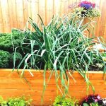 PLANTERS FOR VEGETABLES