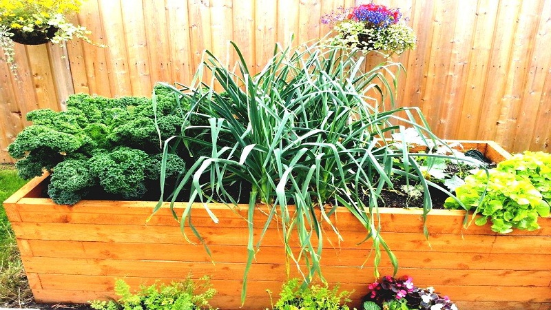 THE 5 BEST PLANTERS FOR VEGETABLES AND FRUITS