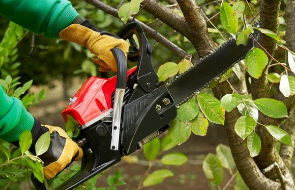 The Benefits of Trimming Hedges and Trees